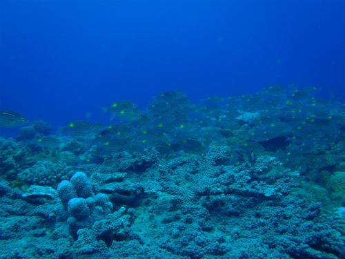 120501_10_08本目トライアングルロックス魚影.jpg