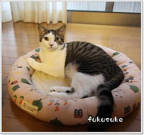 IMG_4482suke.jpg