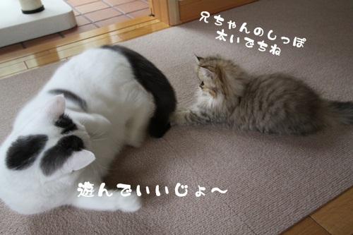 IMG_4668pm.jpg