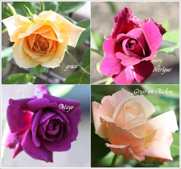 bara1_20120520123556.jpg