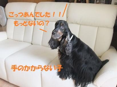 DSCF4694.jpg