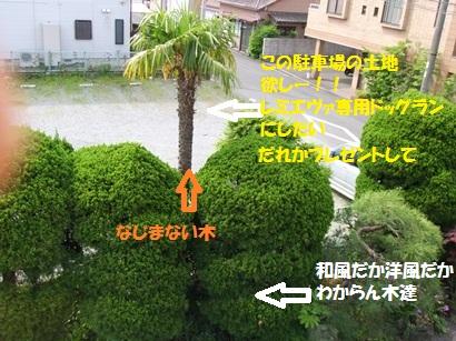 DSCF4696.jpg