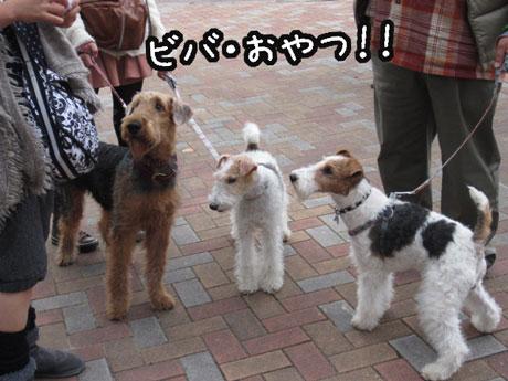 11_20121105170946.jpg