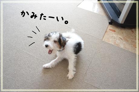 1_20120927120300.jpg