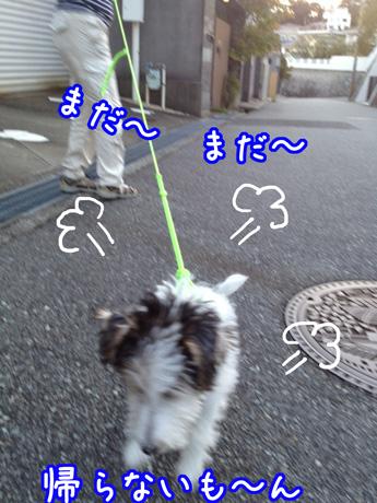 1_20121005121920.jpg