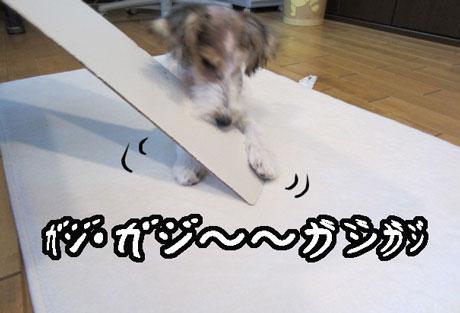 1_20121029124329.jpg