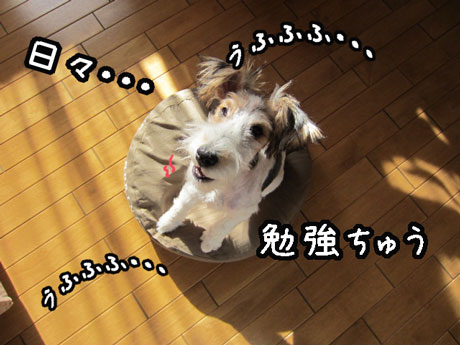 1_20121102113744.jpg