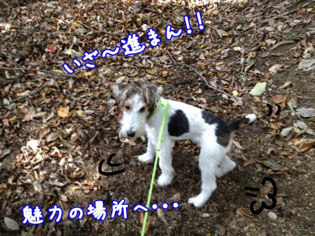 1_20121115203833.jpg