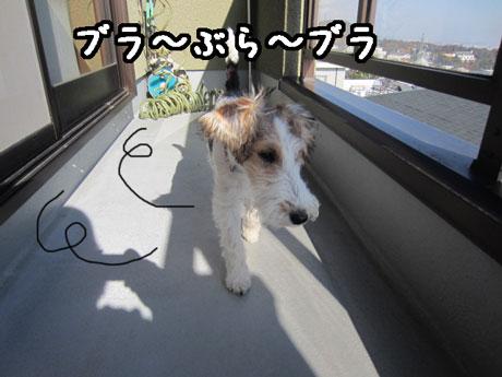 1_20121119132645.jpg