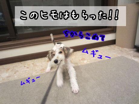 1_20121124173224.jpg