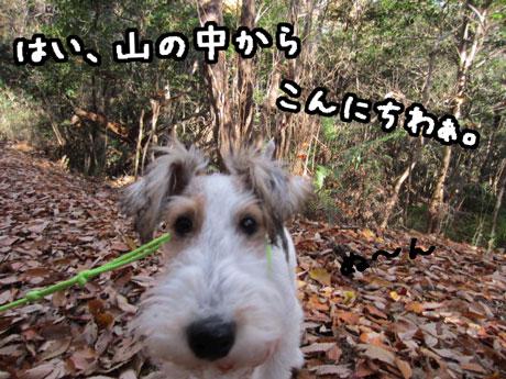 1_20121205165544.jpg