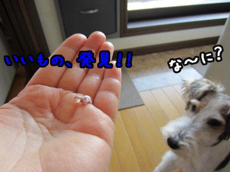 1_20121208151557.jpg