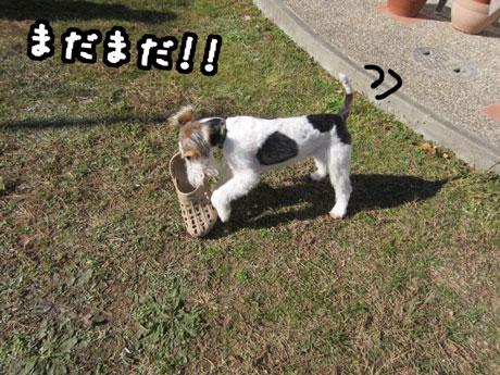 1_20121208154927.jpg