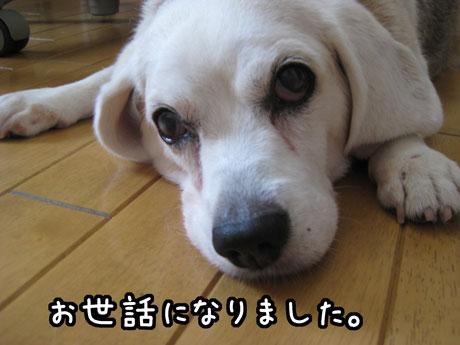 1_20121231164638.jpg