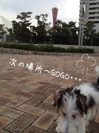 2_20121013011325.jpg