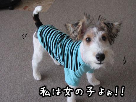 2_20121027150242.jpg