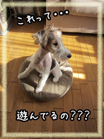 2_20121101144816.jpg