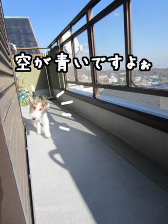 2_20121119132645.jpg