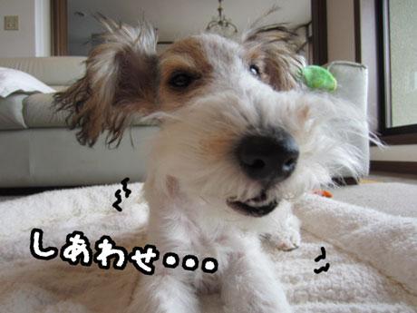 2_20121124170601.jpg