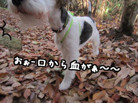 2_20121205165545.jpg