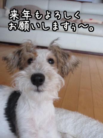 2_20121231164639.jpg