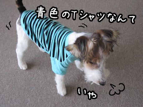 3_20121027150241.jpg