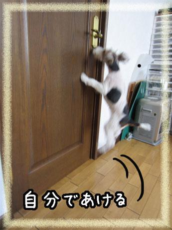 3_20121102113743.jpg