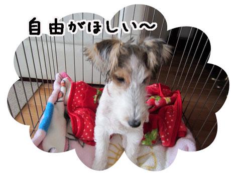 3_20121110154957.jpg