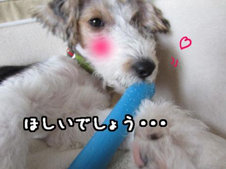3_20121112141853.jpg
