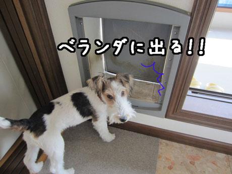 3_20121119132644.jpg