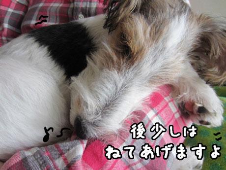 3_20121120152247.jpg