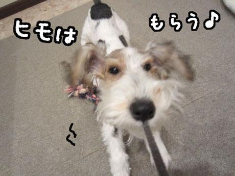 3_20121124173222.jpg