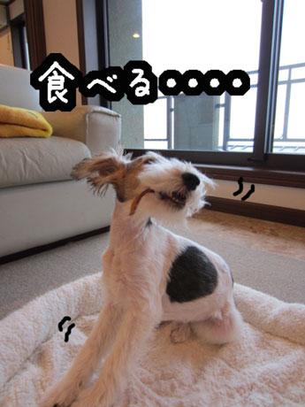 3_20121126141207.jpg