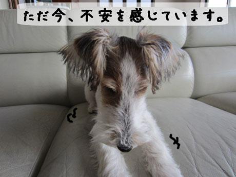 3_20121201155857.jpg
