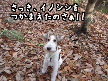 3_20121205165546.jpg