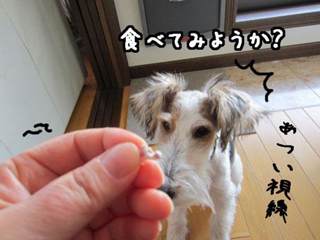 3_20121208151556.jpg