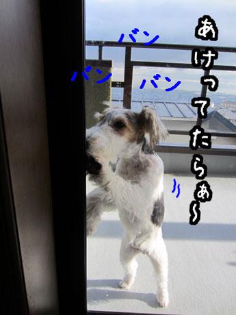 3_20121222172327.jpg