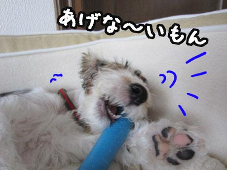 3a_20121112141852.jpg