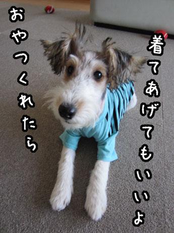 4_20121027150239.jpg