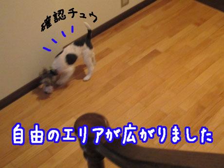 4_20121110154954.jpg