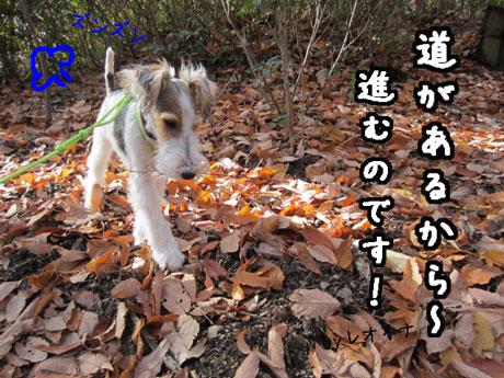4_20121205165543.jpg