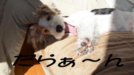 4_20130102230022.jpg