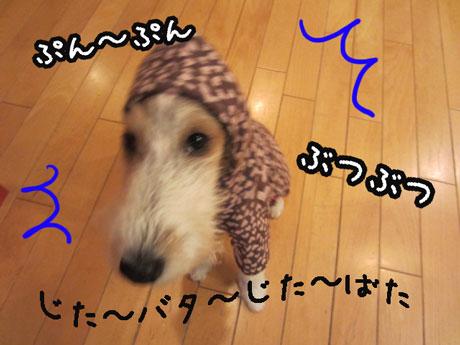5_20121105162324.jpg