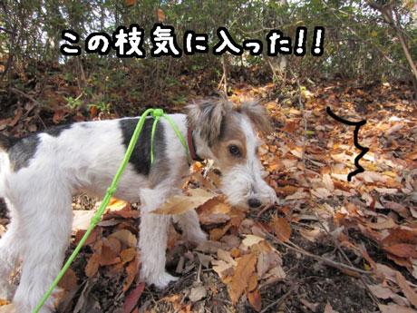 5_20121205171234.jpg