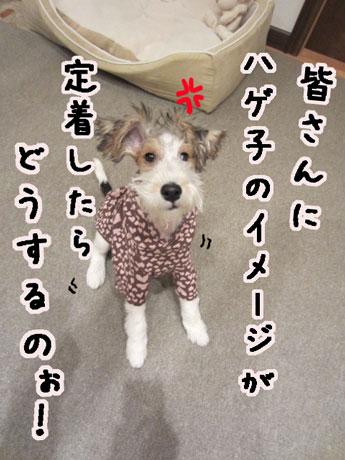 7_20121105163719.jpg