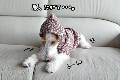 7_20121224231436.jpg