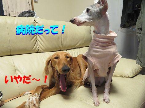b_20131228102942466.jpg