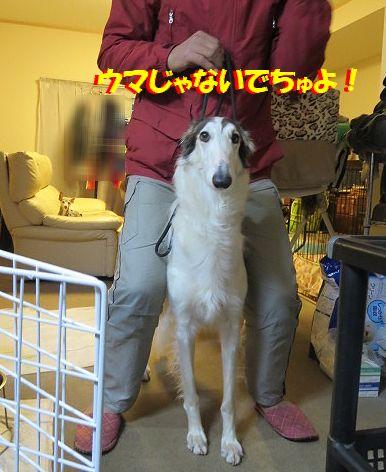 b_20140110075757f8a.jpg