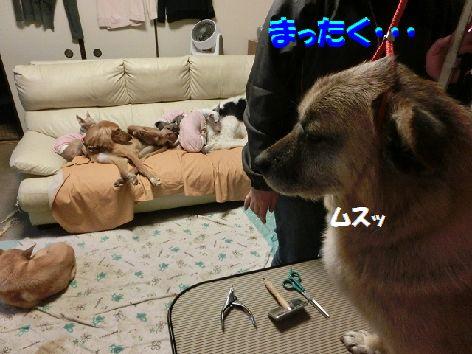 e_20140124094421319.jpg
