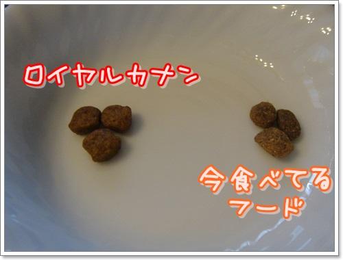 DSC08225.jpg